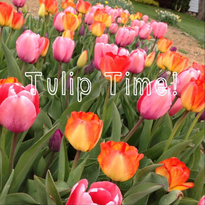 tulip-time-e1398718903120.jpg