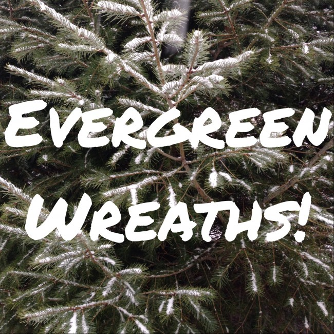 evergreen-e1416003879779.jpg