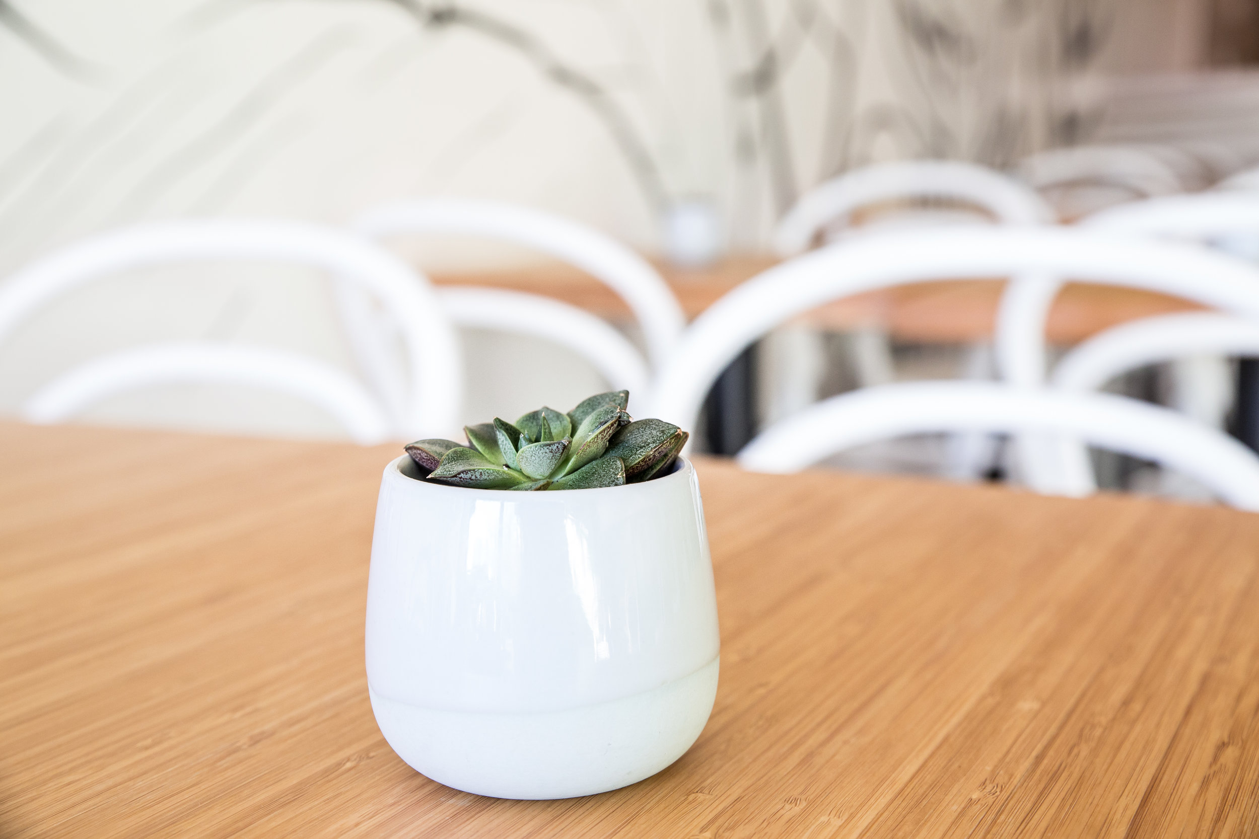 sprout (11 of 40).jpg