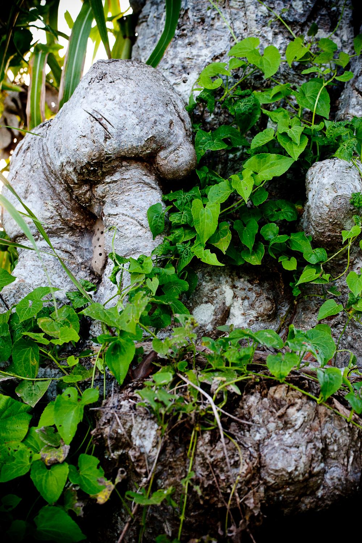 HayleyMurphyPhotography-4175.jpg