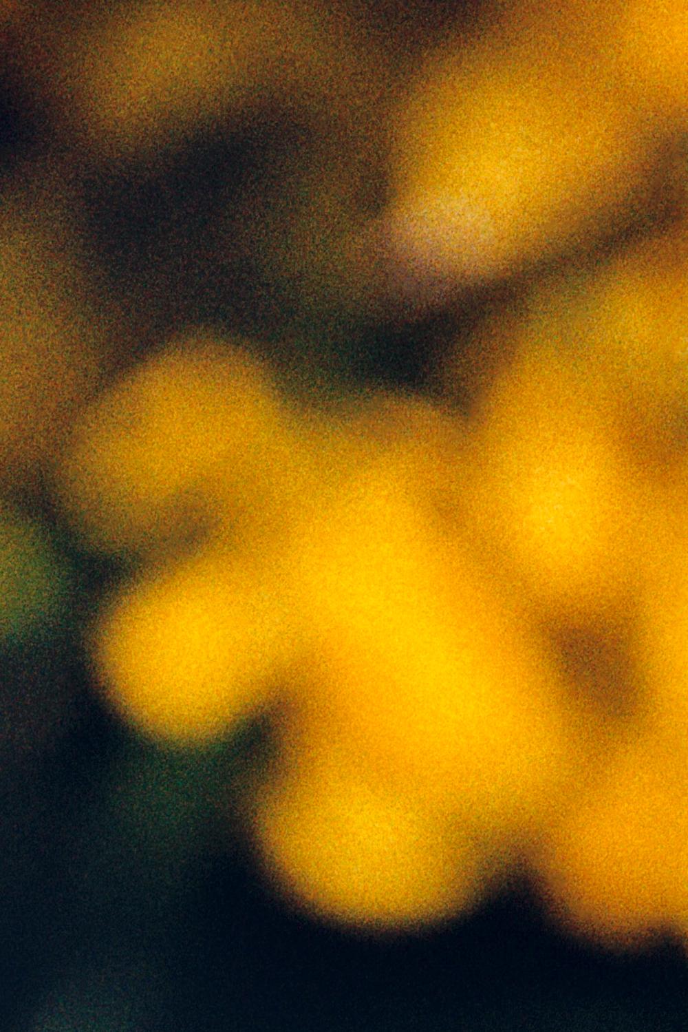 julien_capelle_fleurs_jaunes_flous.jpg