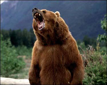 grizzly-bear-duffle-blog.jpg