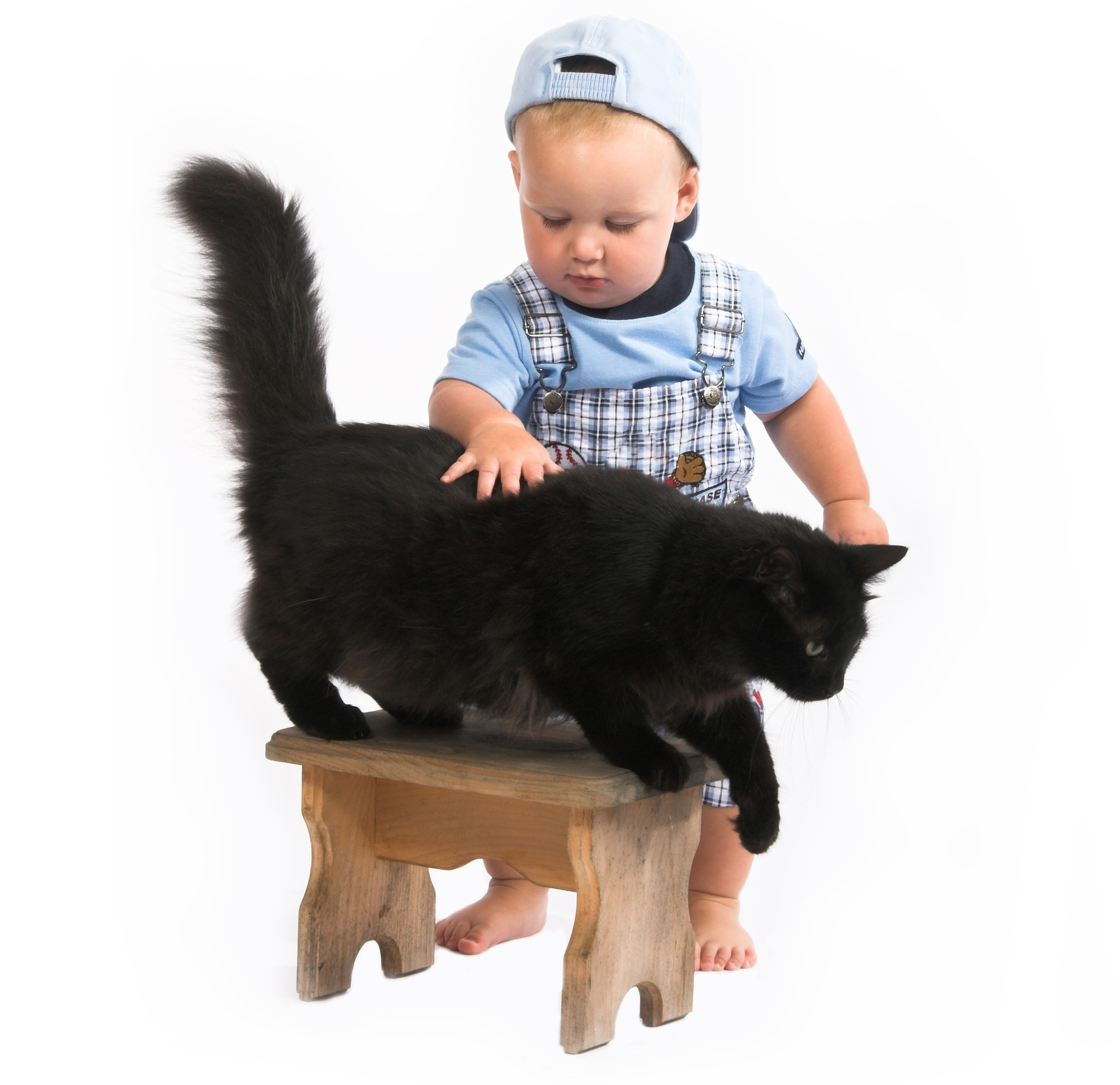 bigstock-baby--blackcat-794427_cED2.png