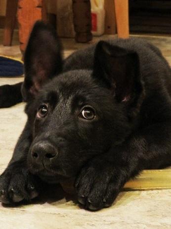 Pup2.jpg