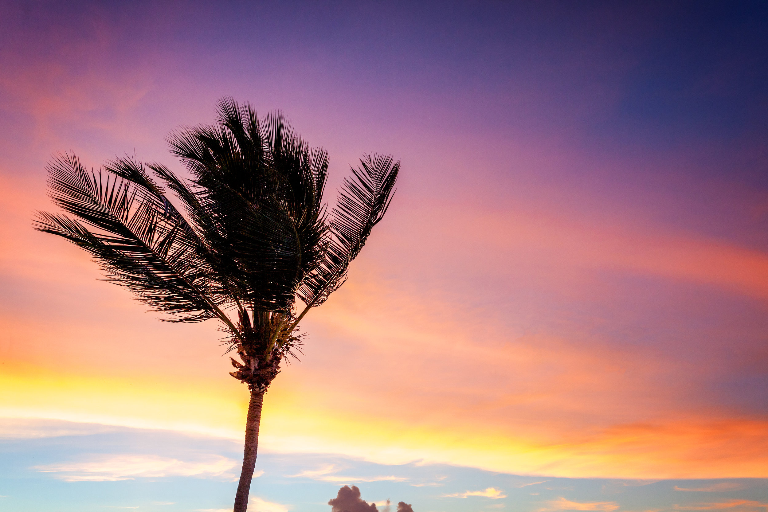 A palm tree in the sunrise