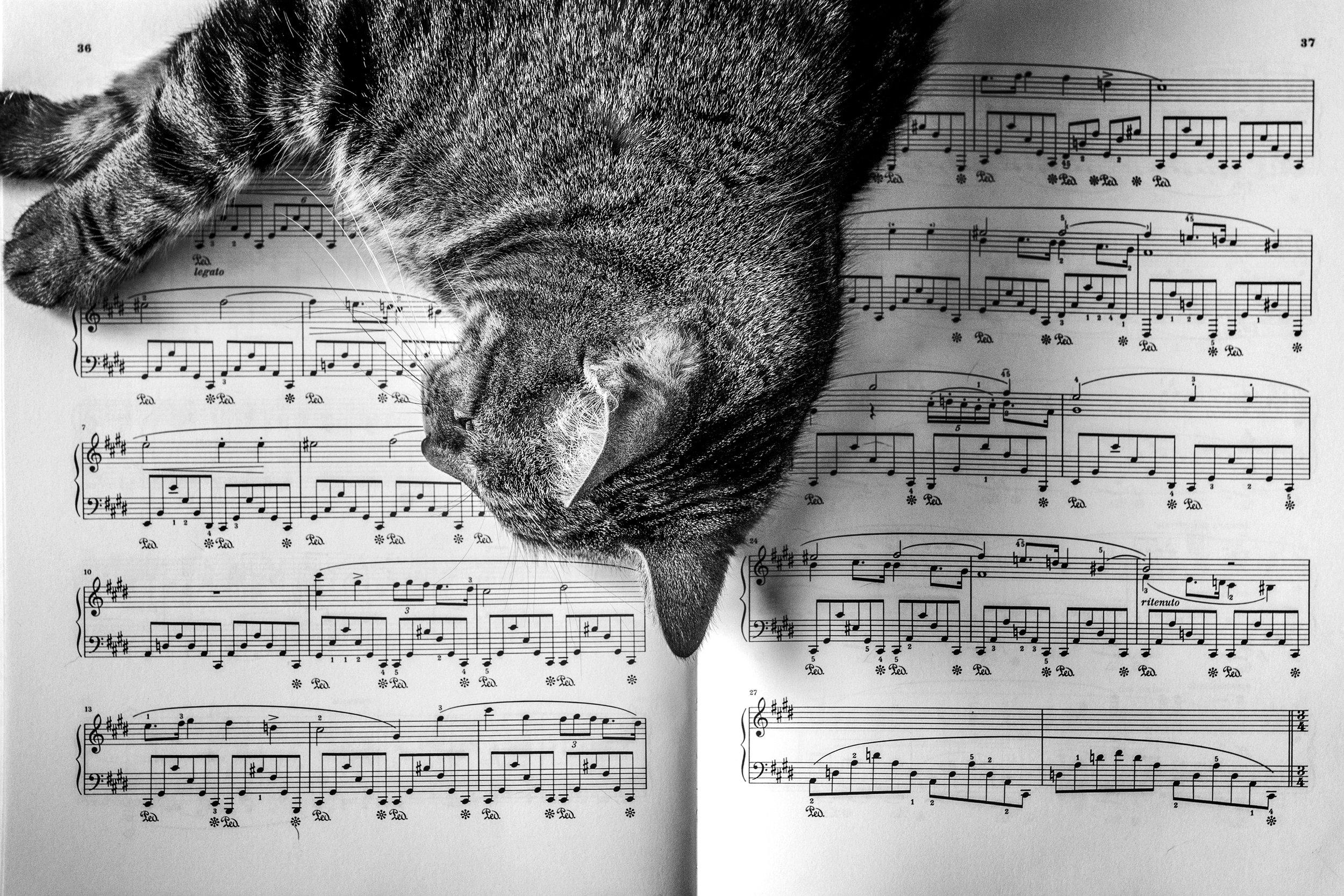 Cat sleeping on a piano sheet