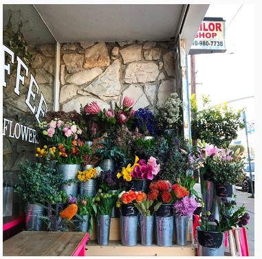 flower boy project 1.JPG