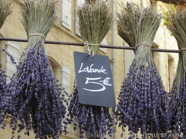 Lavendar at the market in Uzes