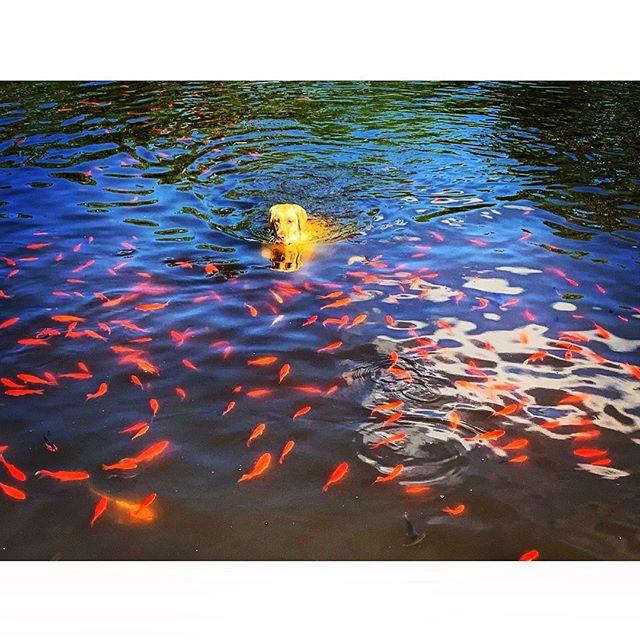 Monet's water lilies reimagined through psilocybine.