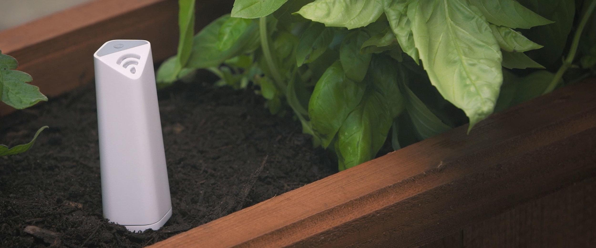 PlantLink_plant-sensor-garden_far_1.jpg