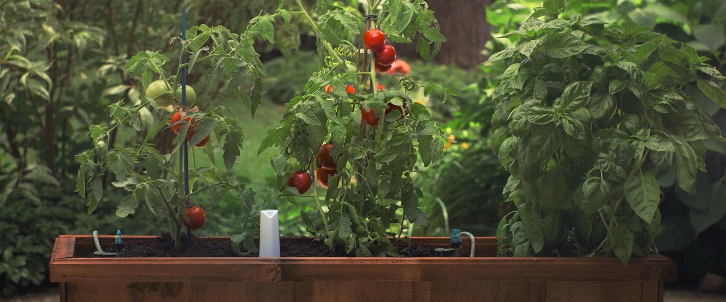 PlantLink_plant-sensor-garden.jpg