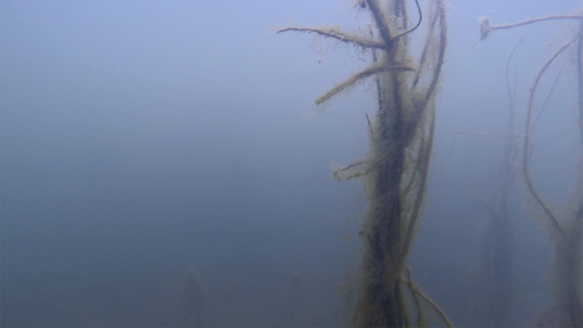 Sanchez, Casilda_Y el mar se nego a ser tierra_13_2.jpg