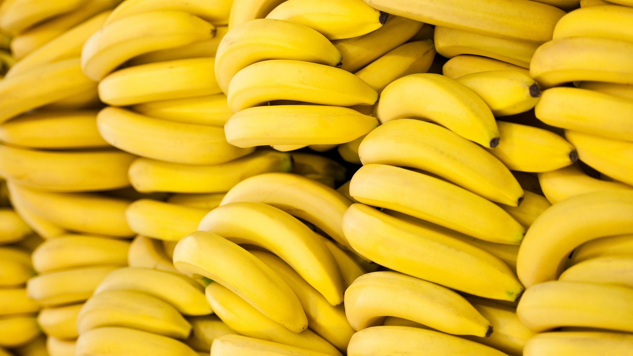 Organic Bananas -