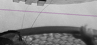 C1 and C2 whiskers palpating a grating with 4mm spatial period, purple line indicates 4kHz high speed imaging plane. (Credit: Brian Isett)