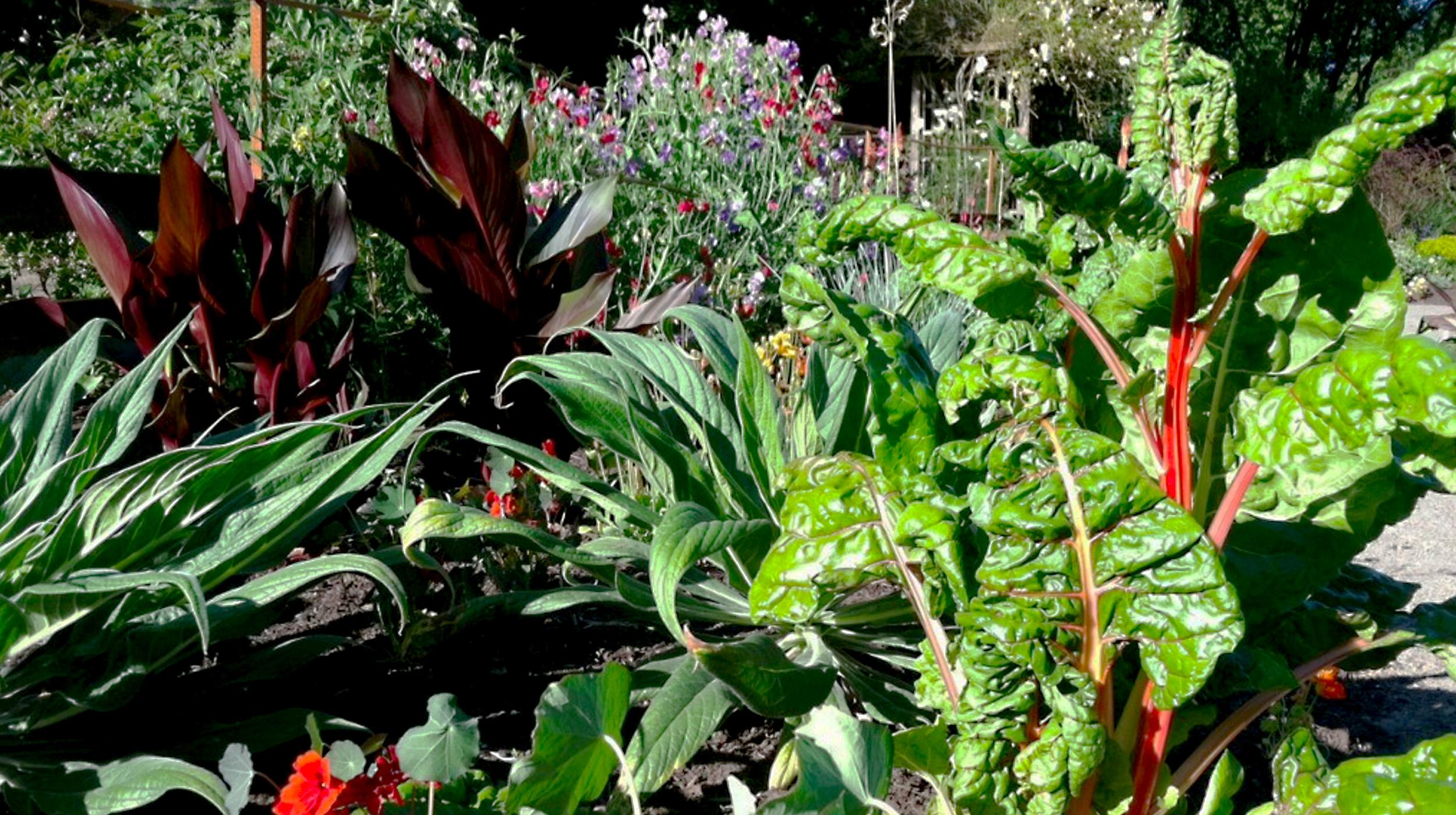 Willamette Farms Garden