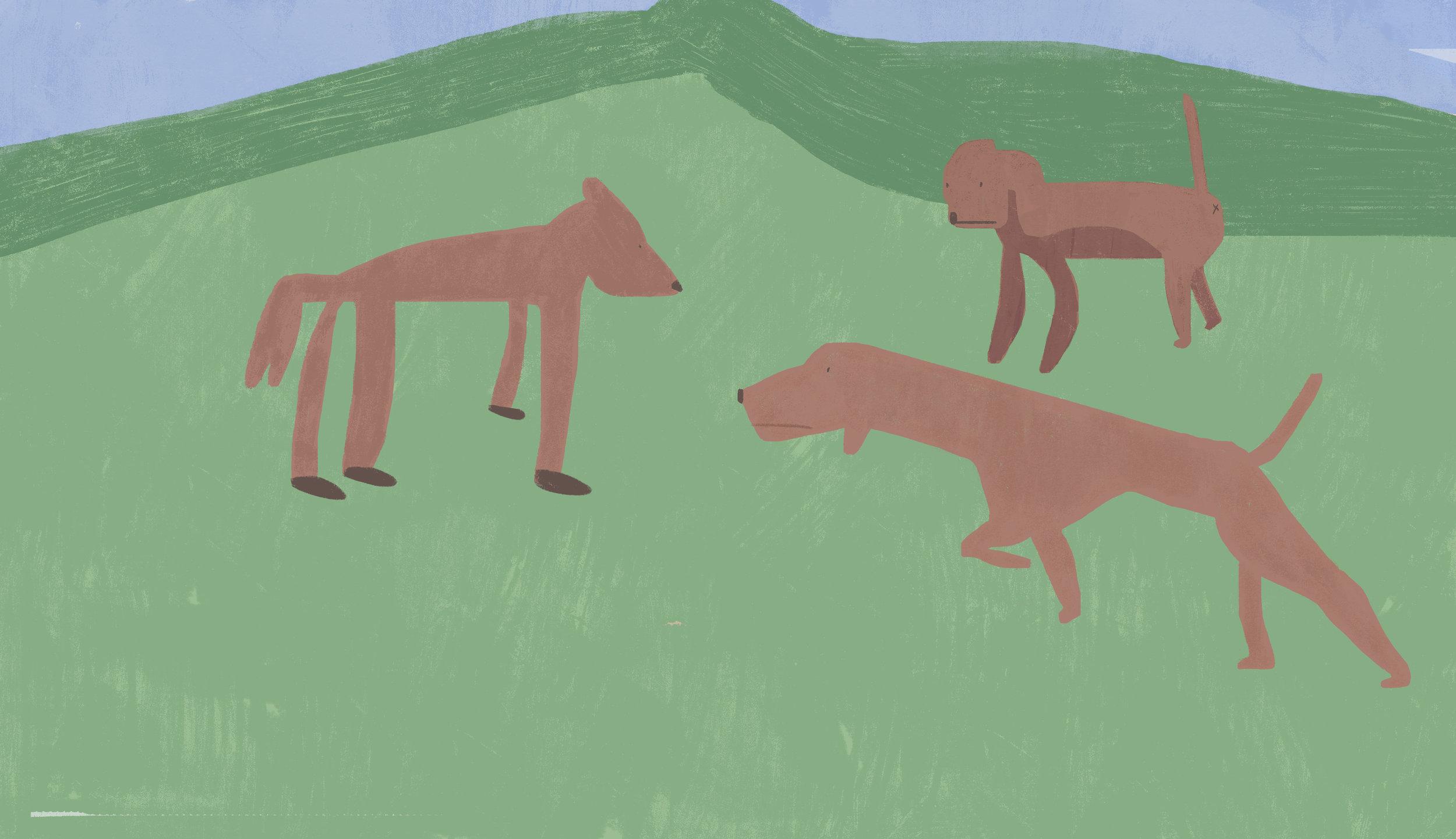 dogsinafield.jpg