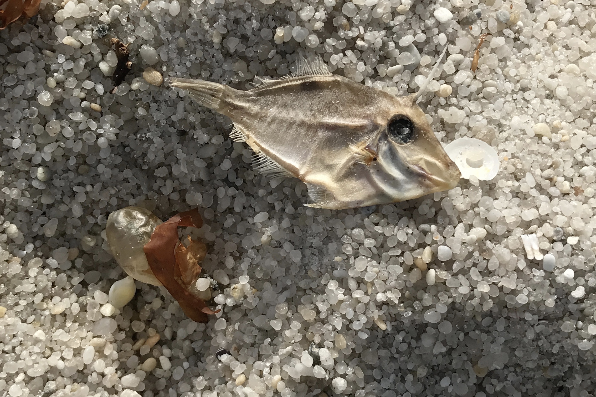 Found lots of these fish fossils washed up along the beach.