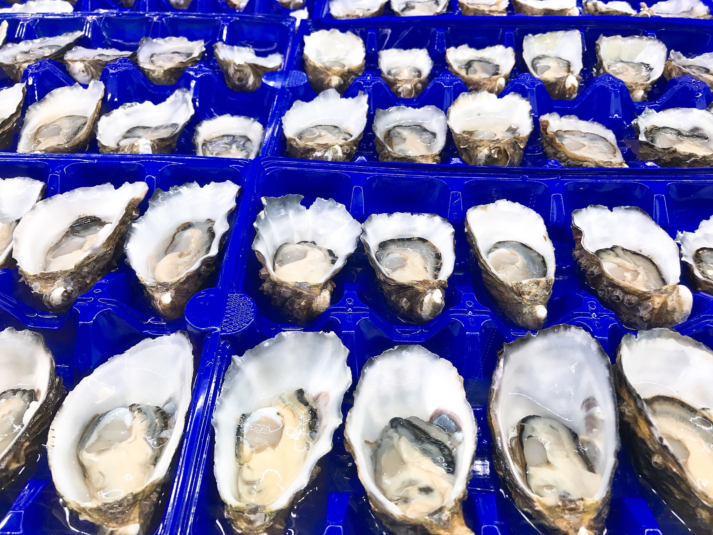 A never ending supply of oysters