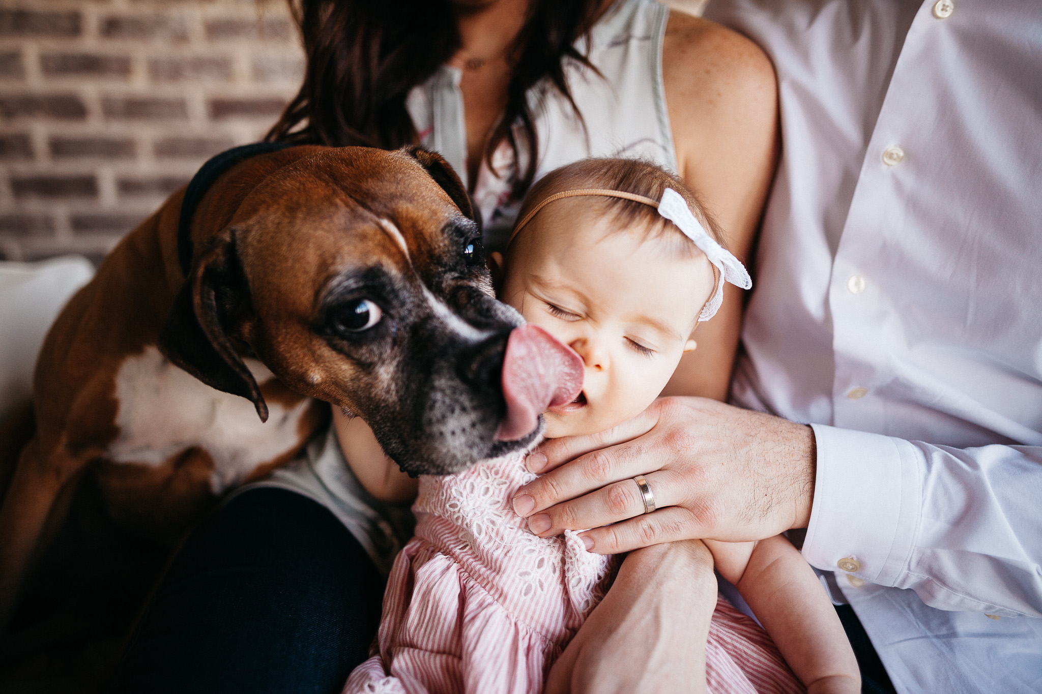 nashville family photographer photography photos pictures session dog pets puppy licking infant baby toddler outdoor thompson's station franklin tennessee brentwood bow cute