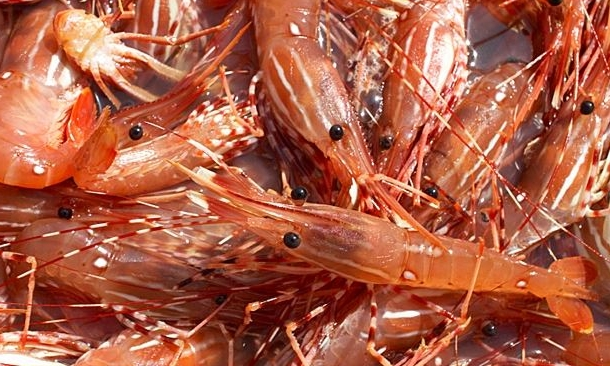 May 2017 - Top 10 SPOT PRAWN PICKS TREVE RING & ANTHONY GISMONDI. - Wild BC spot prawns and fresh local wines picks - including Little Engine Wines
