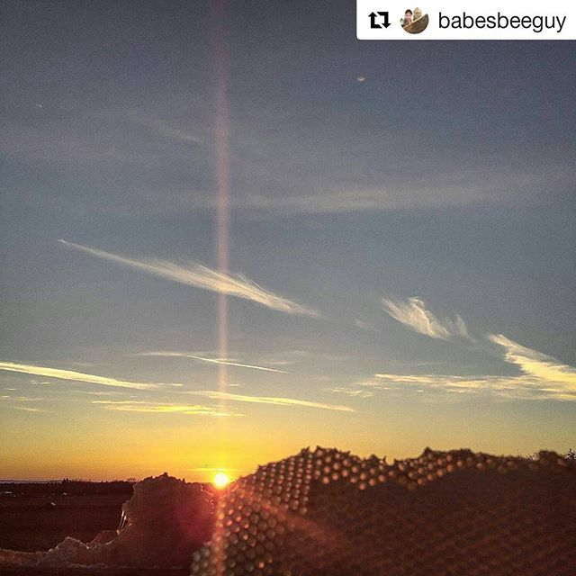 Honeycomb Sunset.  Odds are this piece of comb is in our next batch of lip balm!  #Repost @babesbeeguy