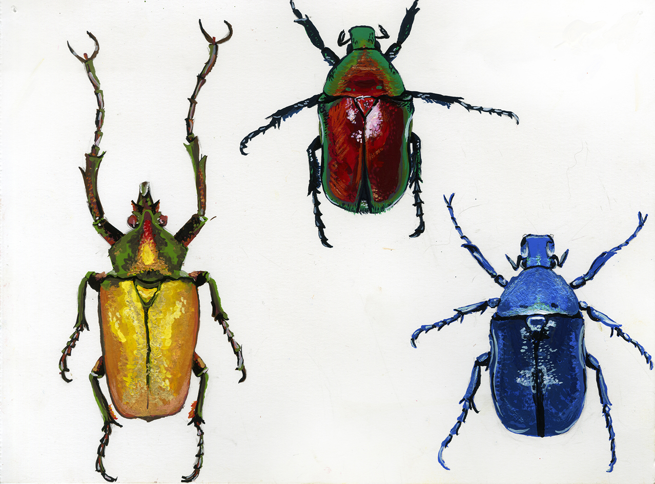 beetle_bugsB_003.jpg