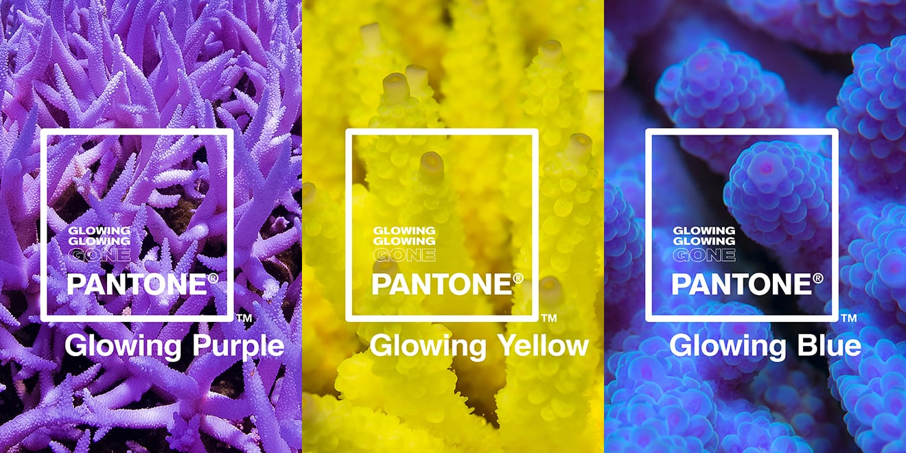 """Glowing, Glowing, Gone""    — a  new color line  from Pantone and Adobe inspired by coral's reaction to climate change"