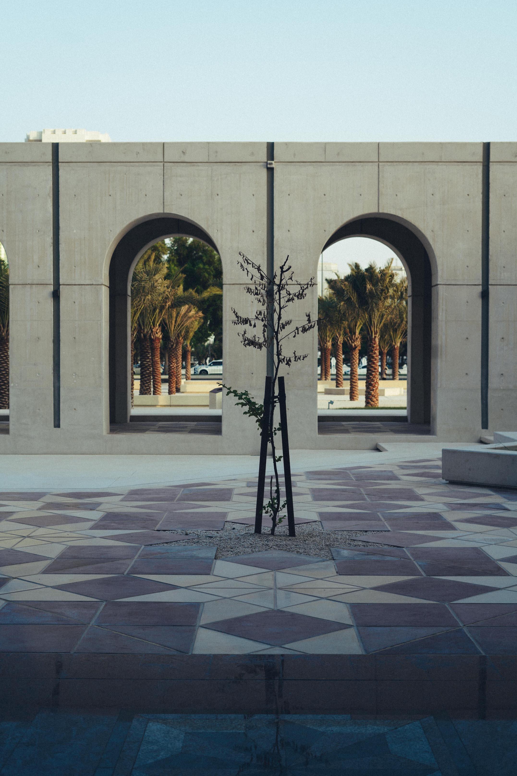 Qasr Al Hosn tree