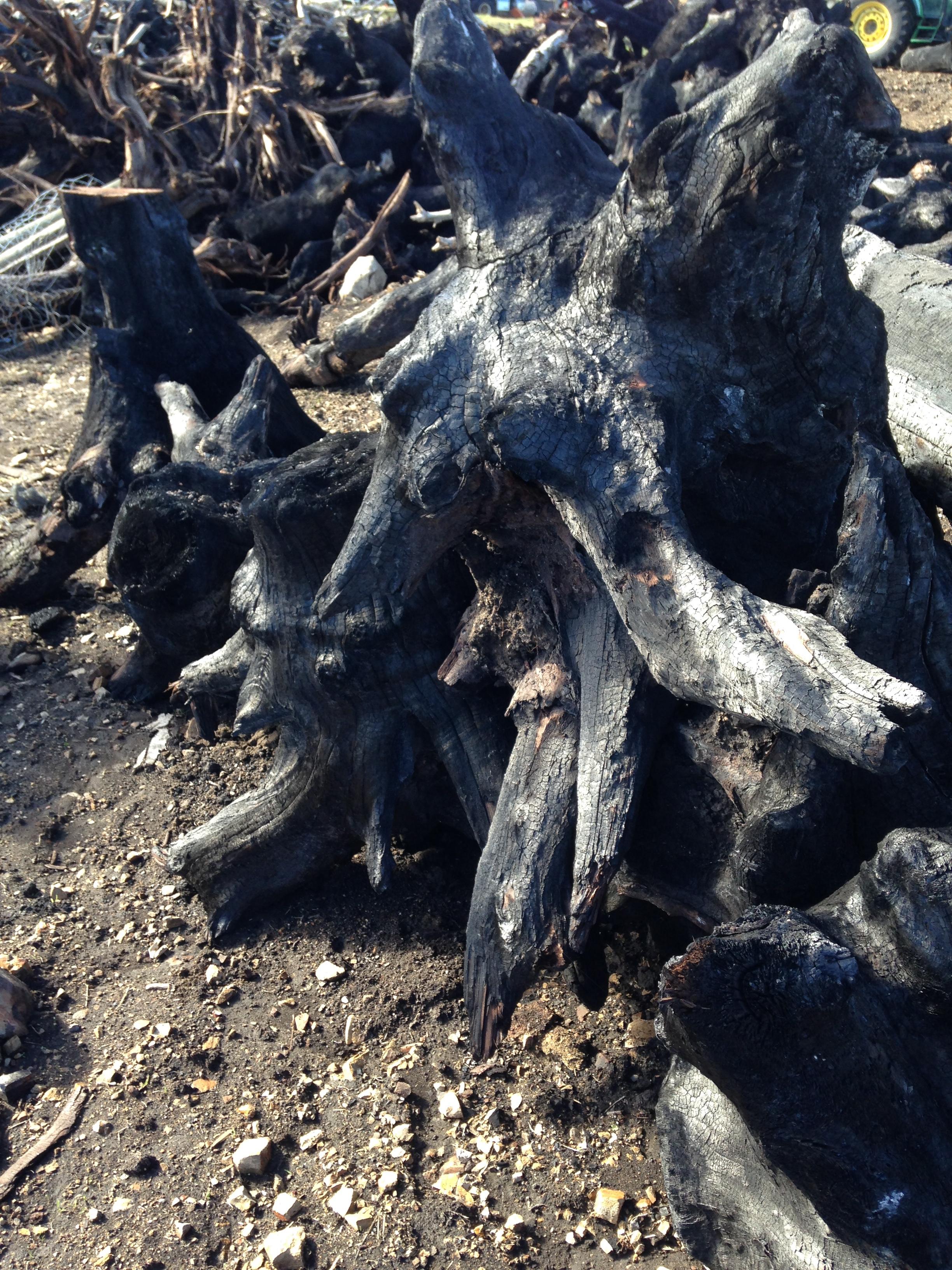 ben-riddering-charred-walnut-root-ball