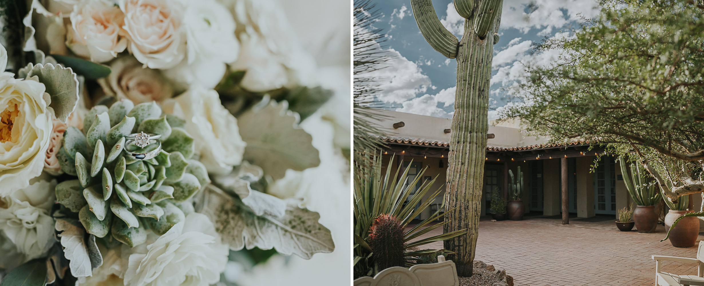 Desert Botanical Garden Wedding Denver Wedding Photographer Elopements 2