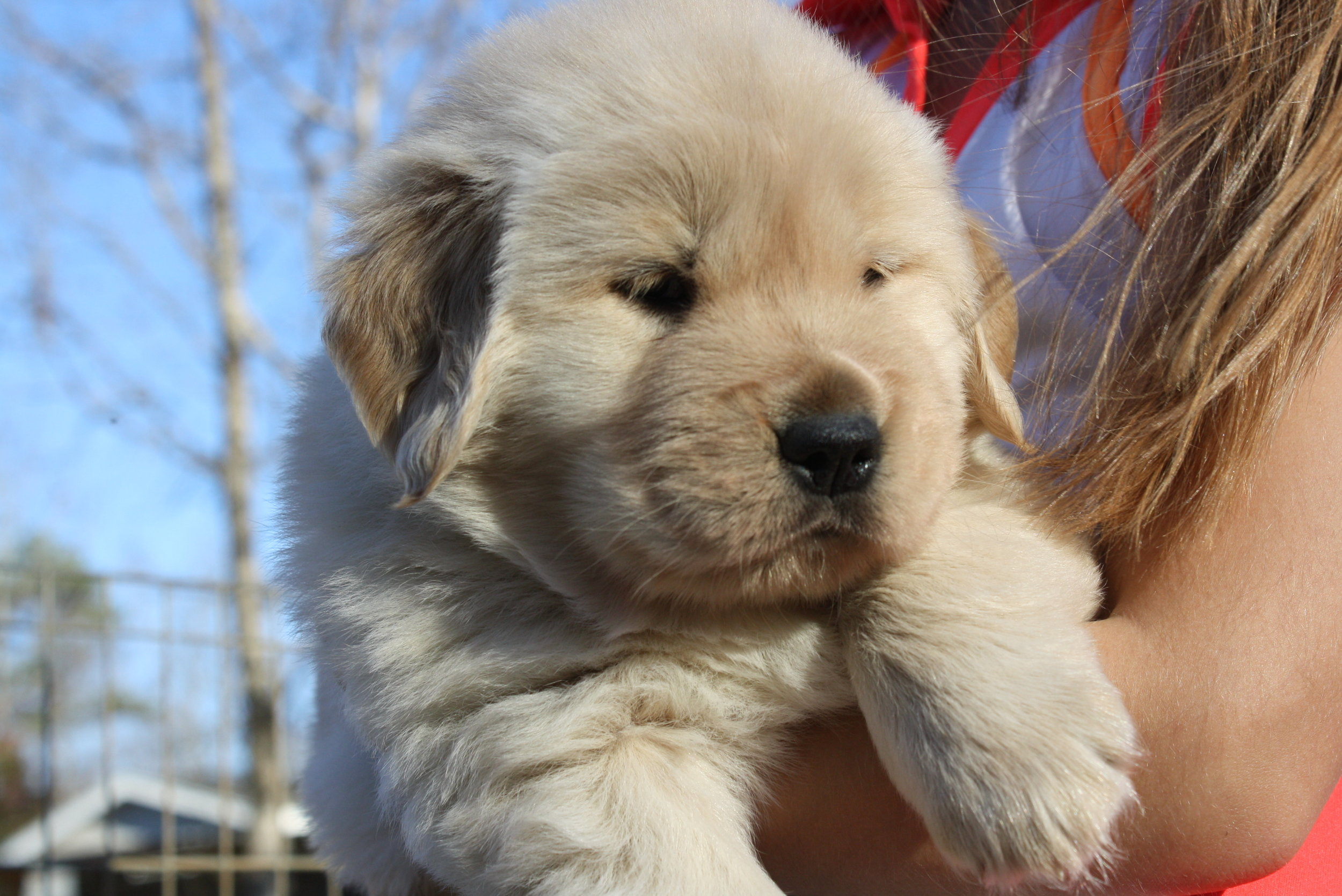 Puppy 8 (2).JPG