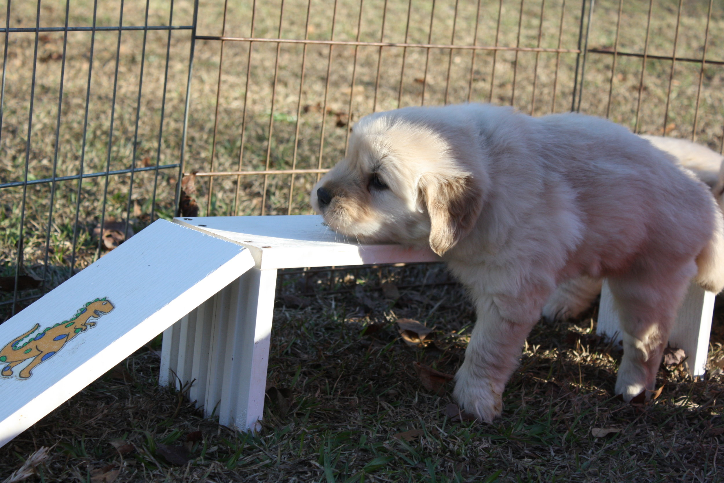 Puppy 8 (3).JPG