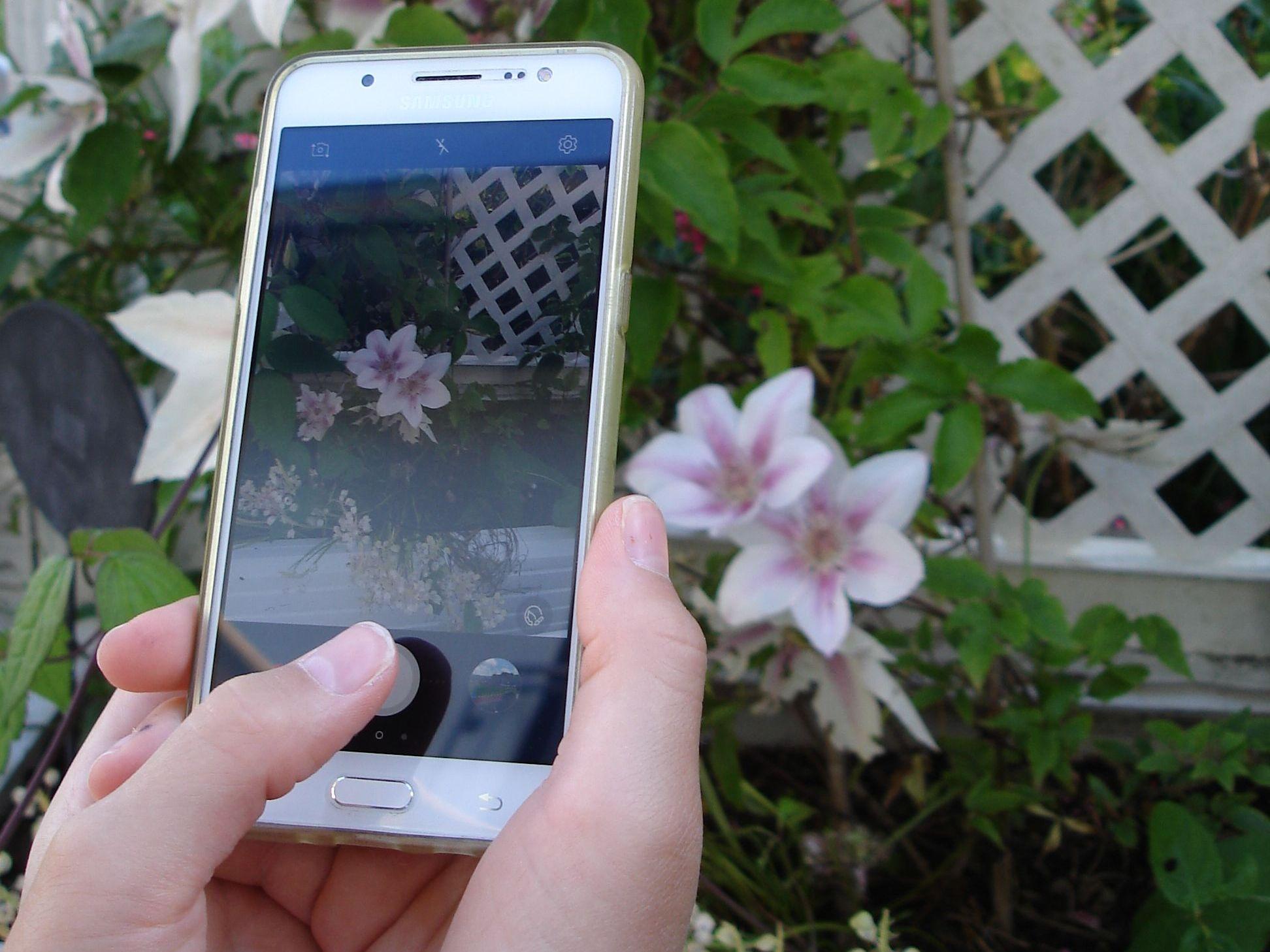 1. Fotos von Pflanze machen - Es ist gut, wenn Sie von ihrer Problempflanze zunächst ein paar aussagekräftige Fotos machen.Wichtig wären dazu folgende Fotos:- Foto von befallenen Stellen an der Pflanze- Foto von Schädling, falls vorhanden- Foto von der Umgebung der Pflanze