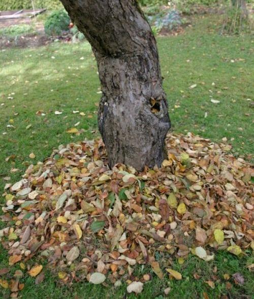 Baum mit Laubhaufen
