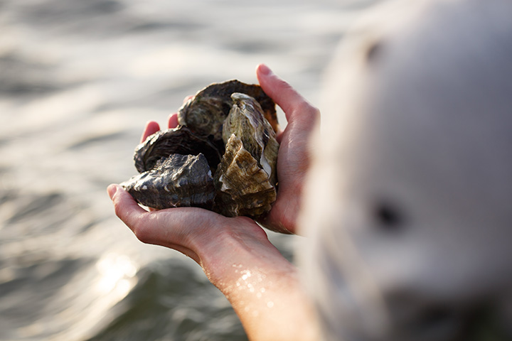 holding_oysters