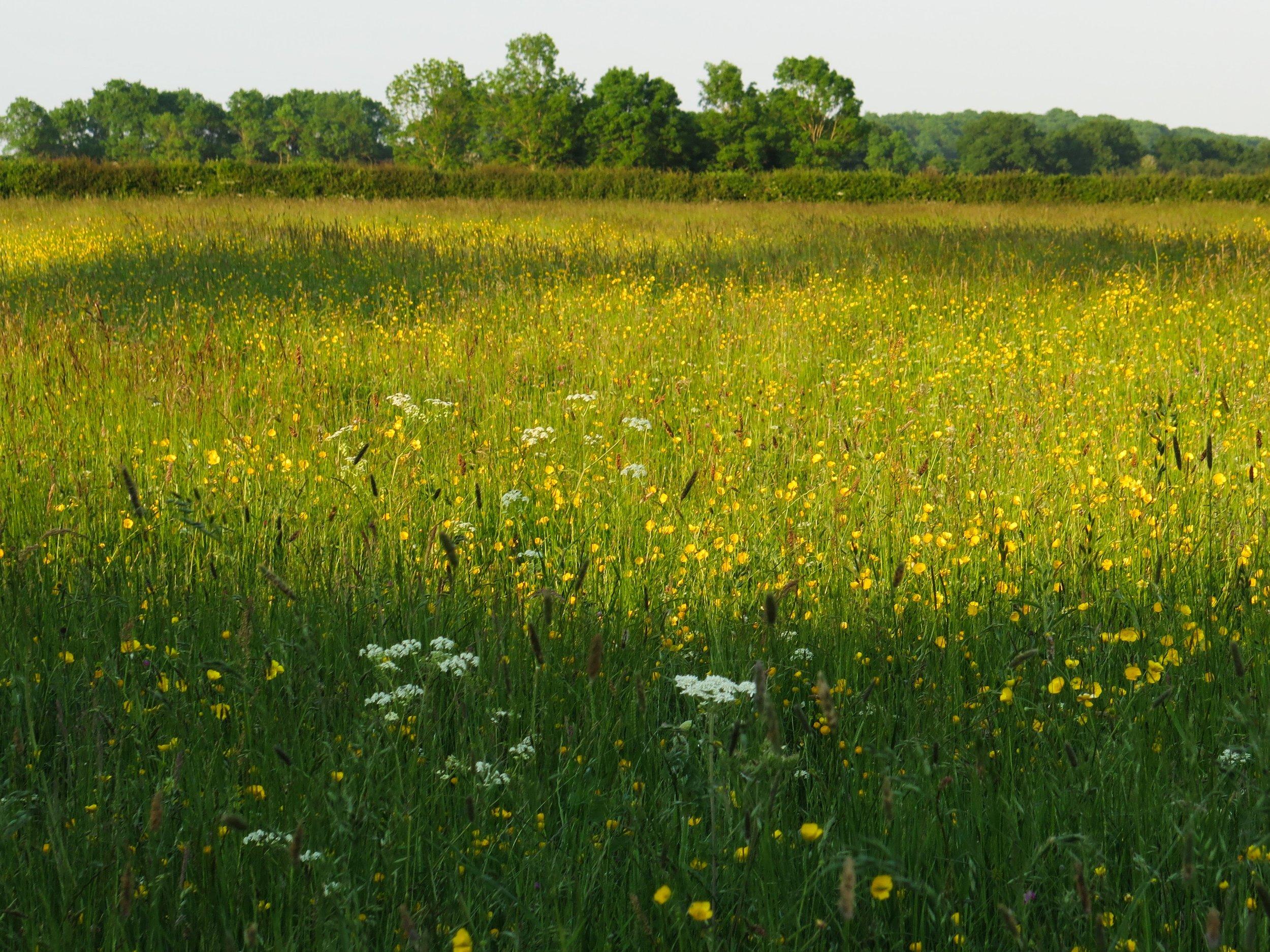 species rich grassland with botanical interest