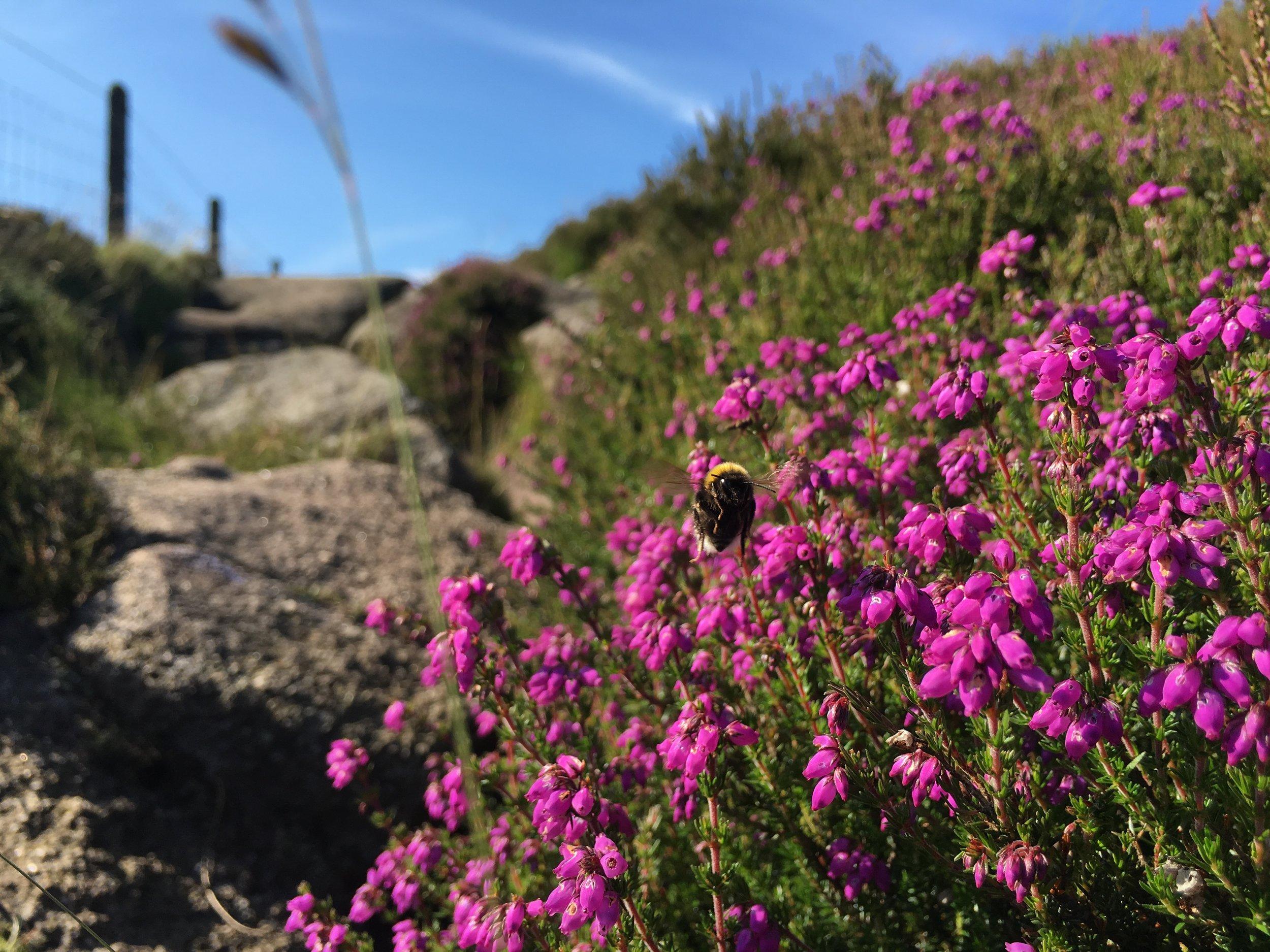 wildflowers growing along a trackway