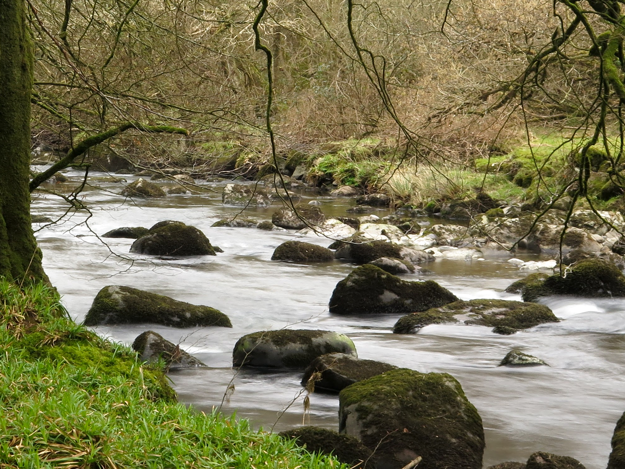 River habitat subject to otter and watervole surveys