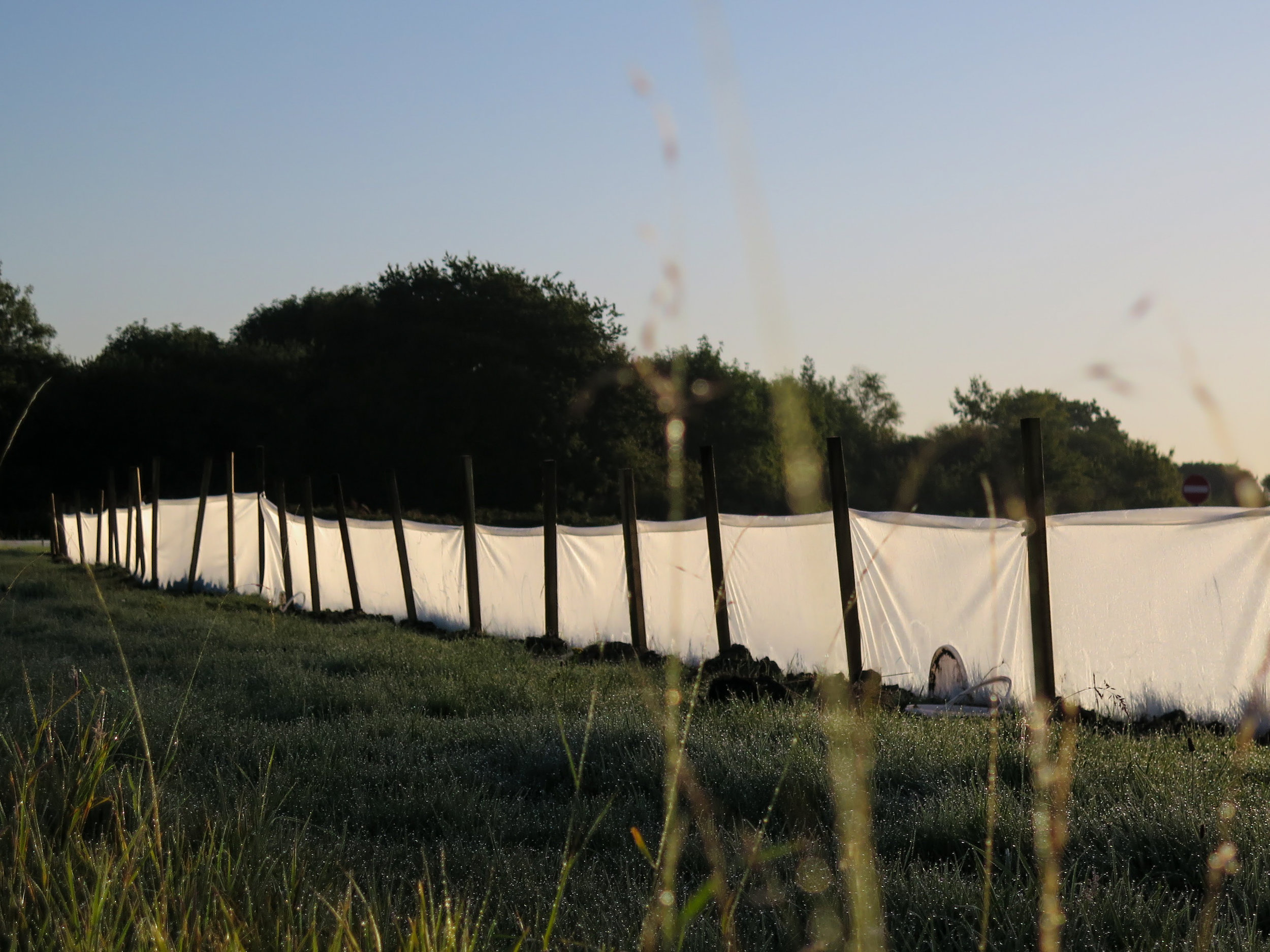 A great crested newt fence at one of LSC's translocation sites - the pitfall traps and artificual refugia are placed along the base of this fence to capture the newts on the inside, whilst the fencing itself prevents newts from re-entering the site.