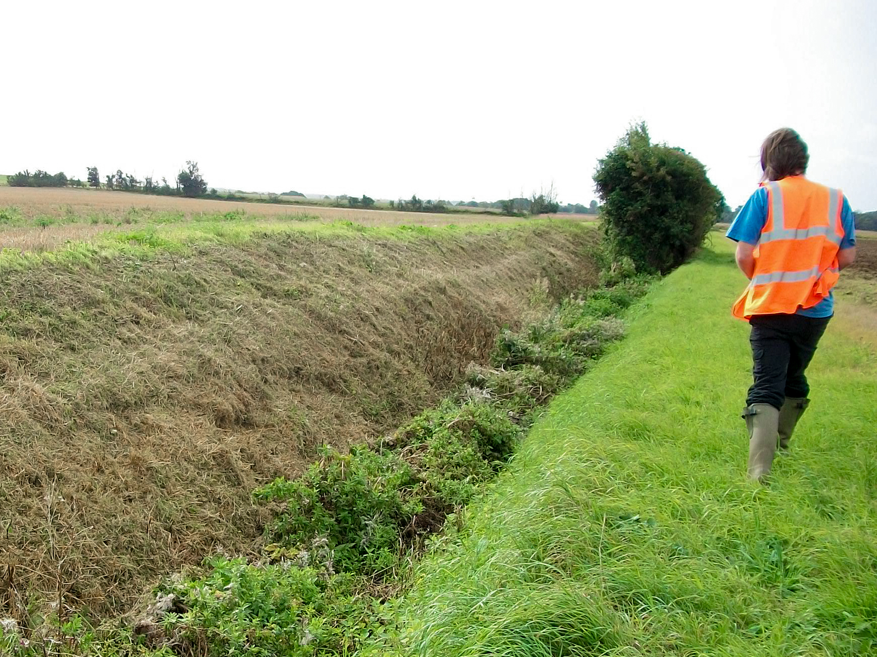 Ditch habitat surveyed for otter and watervole