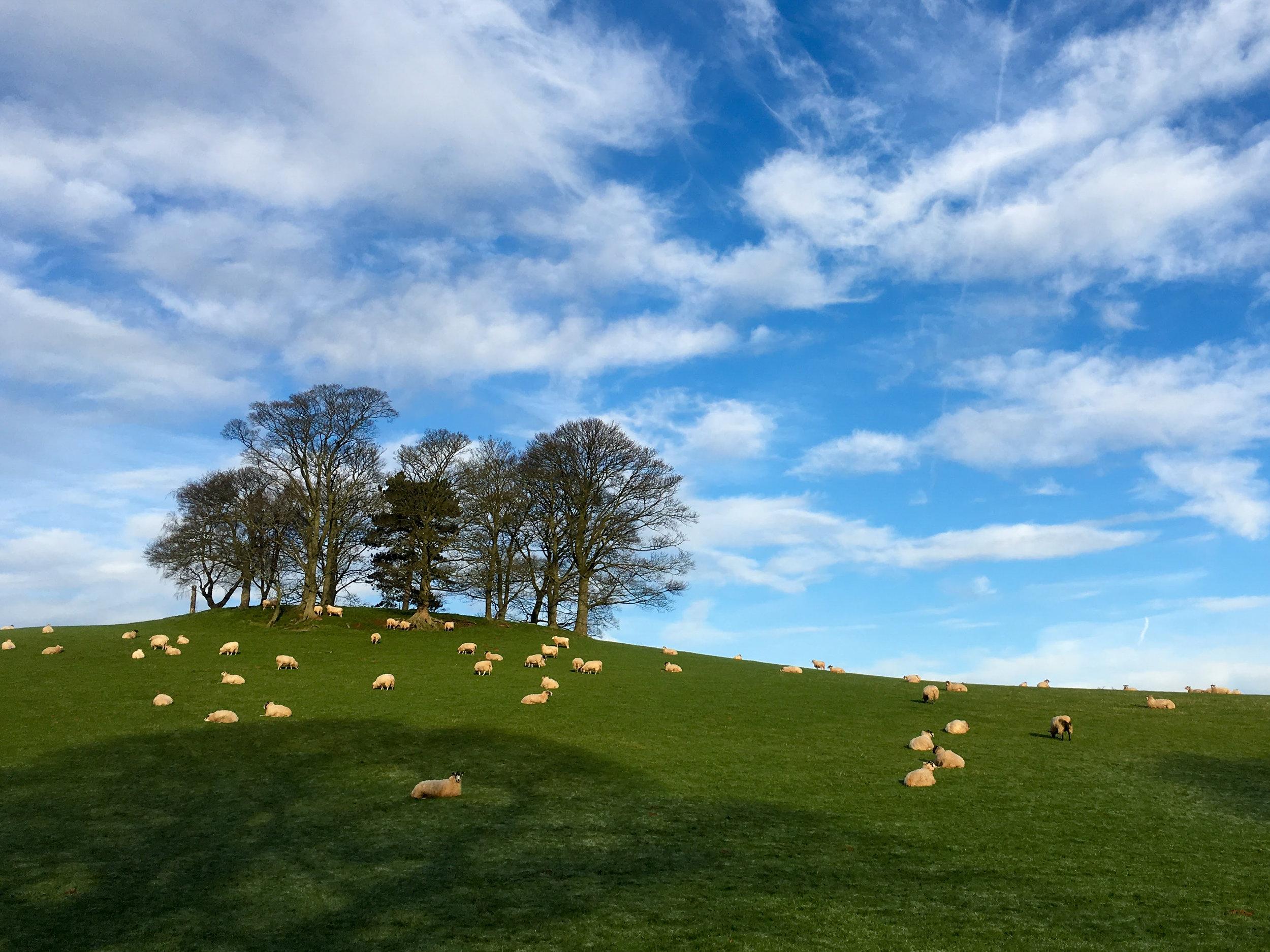 land surveyed to inform planning permission
