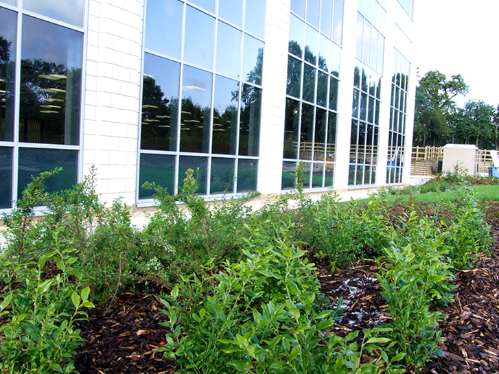 New planting provision on a BREEAM Excellent building where LSC acted as the SQE to the project.