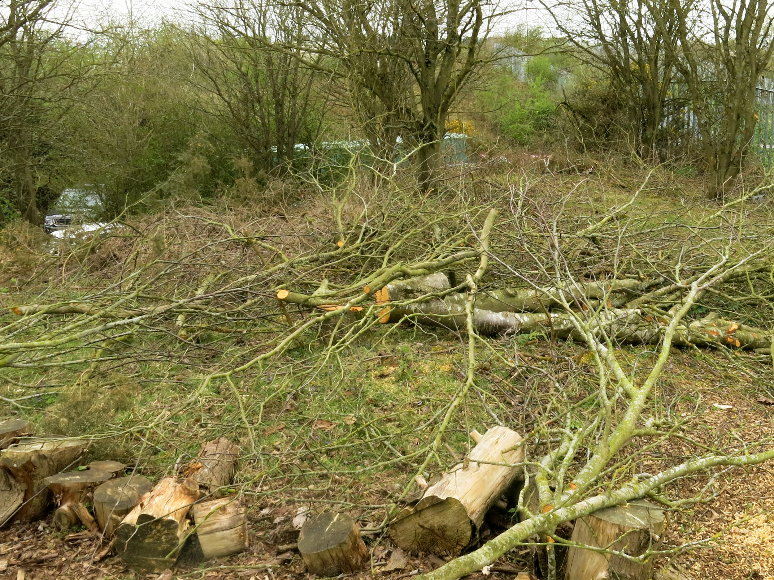 Coppicing of secondary woodland and the generation of brash piles to help encourage the development of woodland flora in the ground layer whilst providing habitat for invertebrates and other species.