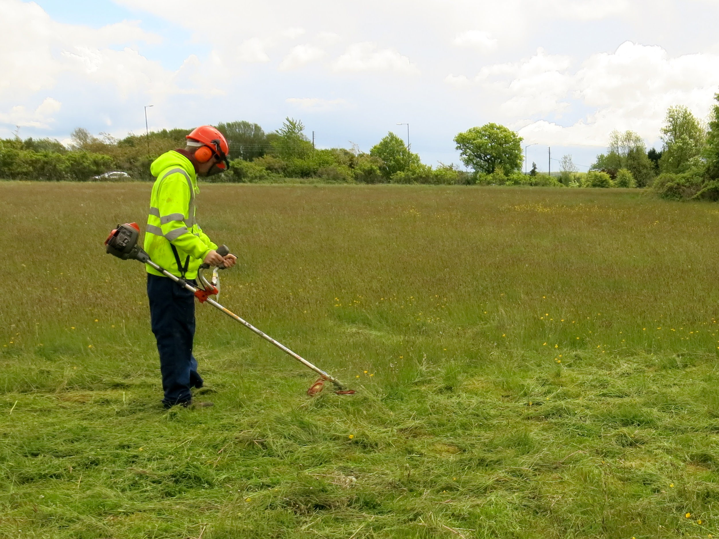 Precautionary strimming of grassland to allow the ecologist to search the working area for  great crested newts  prior to trial pit works commencing on site. This allowed the pre-commencement works to start before a  licence  was in hand, therefore minimising delays to the programme.