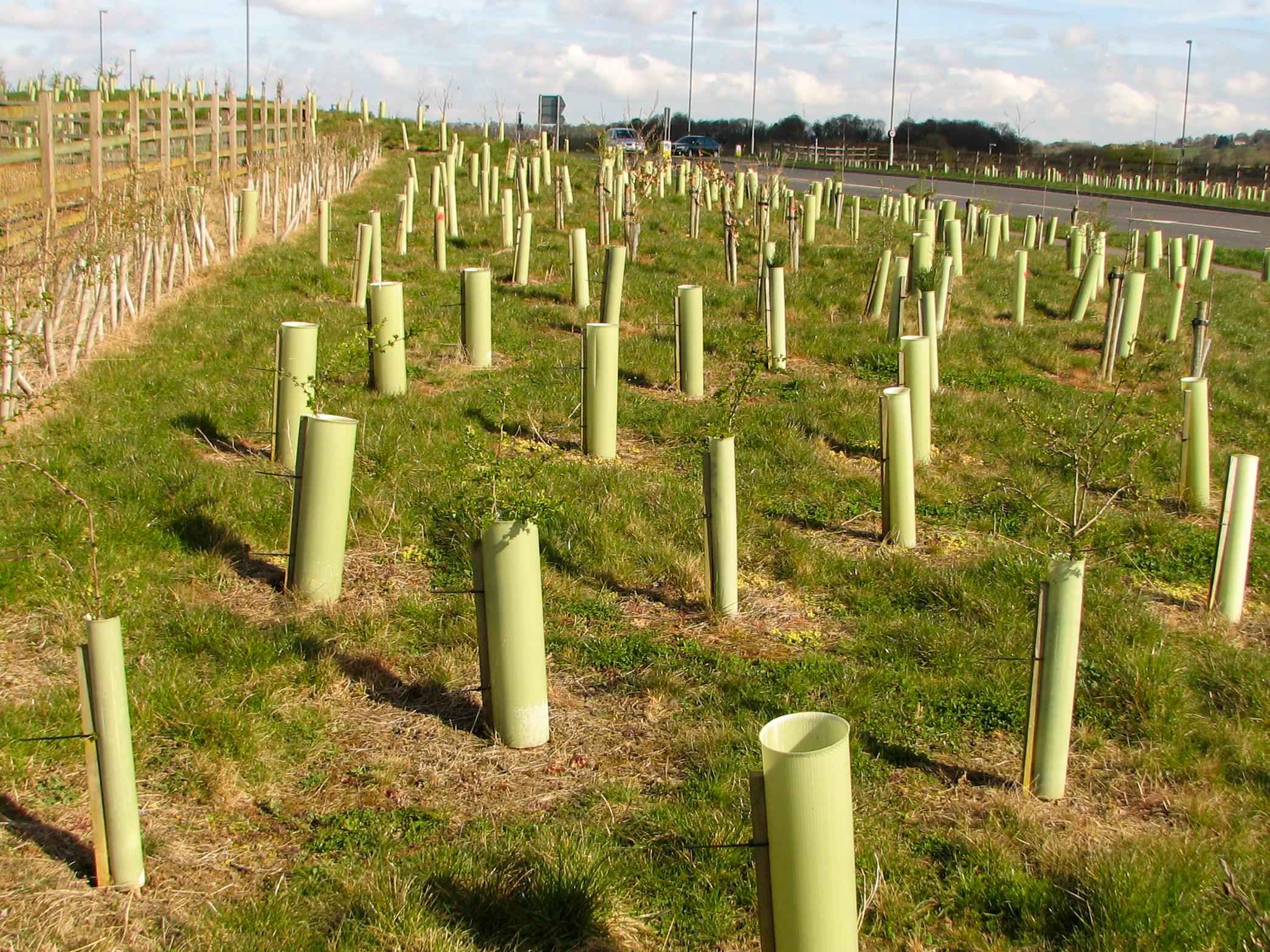 Tree planting is a great way to enhance the green space or soft landscaping on your scheme - it provides green space; screening for visibility and noise; and habitat for a range of native species. Getting the right species mixes and planting design for your site requires expert input to maximise these values.