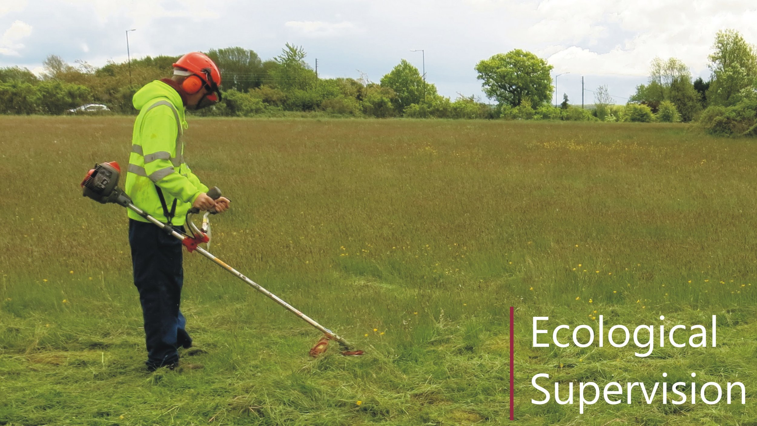 Ecological site supervision of contractors in an ECoW role in Yorkshire