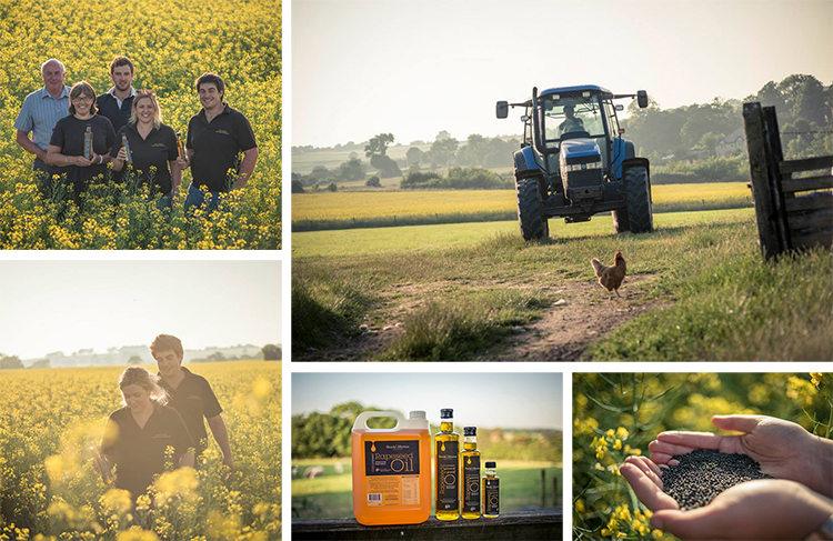 behind the scenes of rapeseed oil production