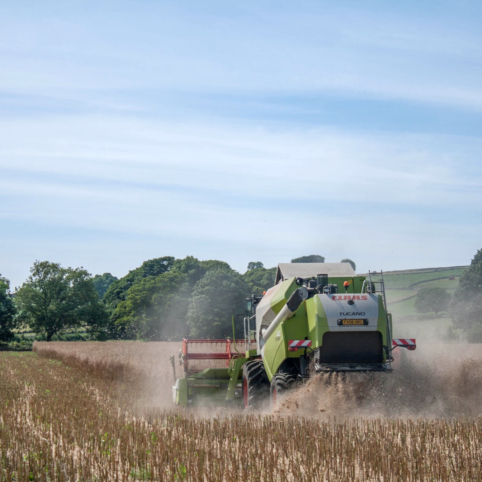harvesting rapeseed oil