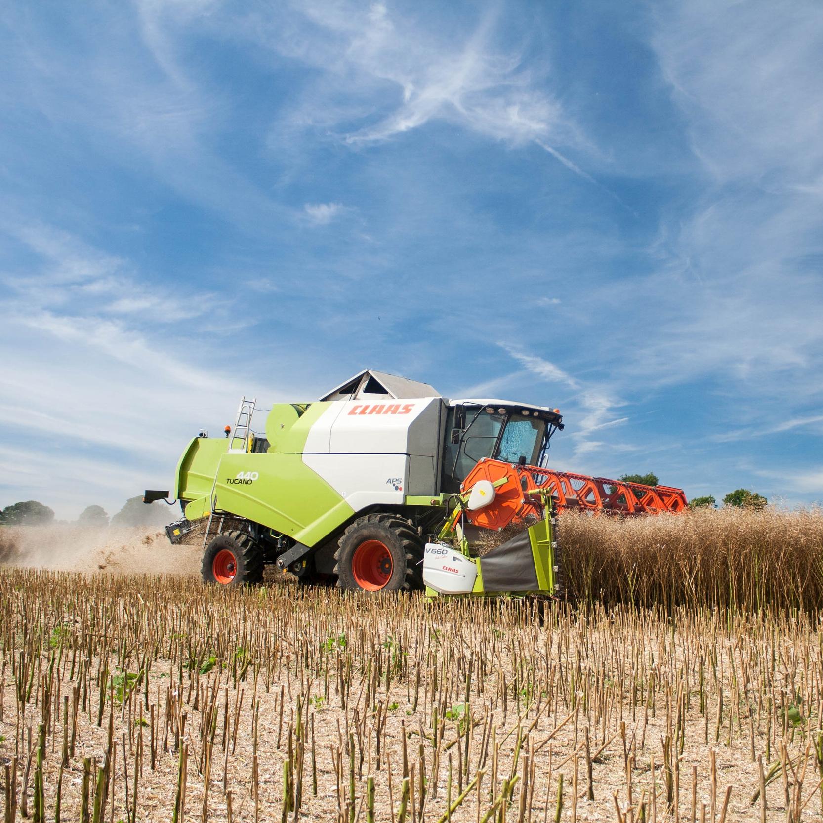 harvesting rapeseed oil crop