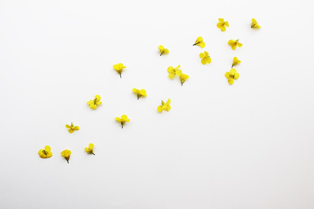 flower_5_small.jpg